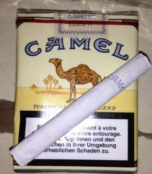 兔子牙沙漠camel骆驼现场版
